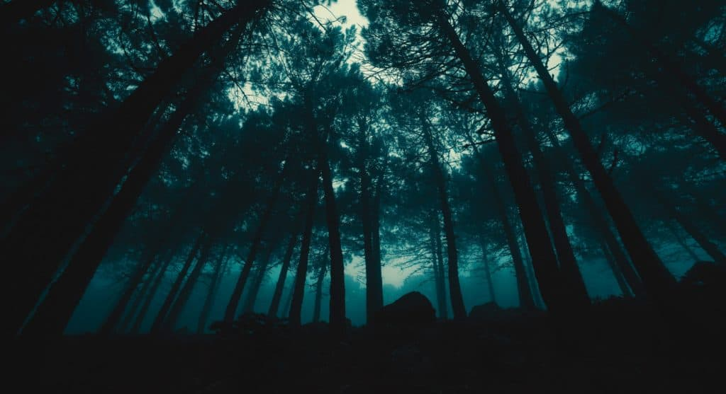 Low perspective of foggy forest