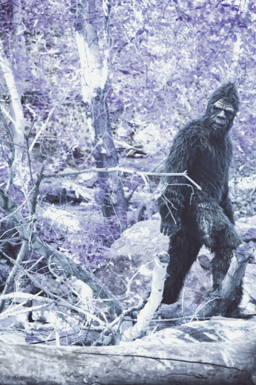Bigfoot walking through the forest.